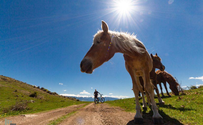 Колко коня виждате на картинката?